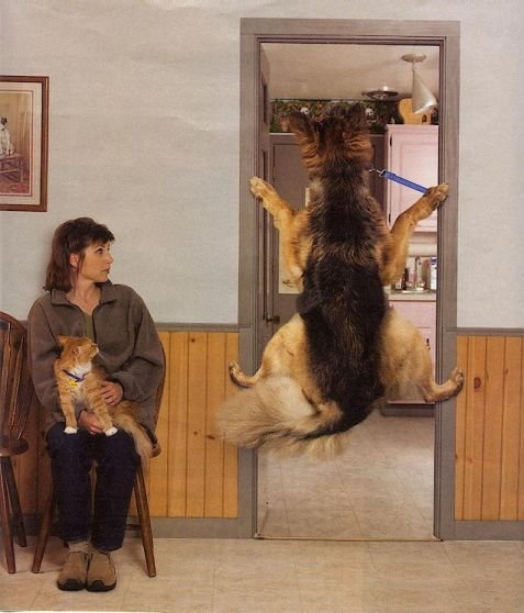 La veterinar