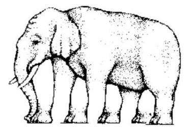 Câte picioare are elefantul ?
