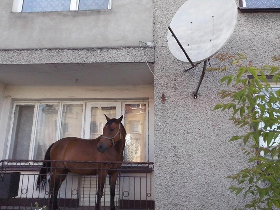 calul de pe balcon
